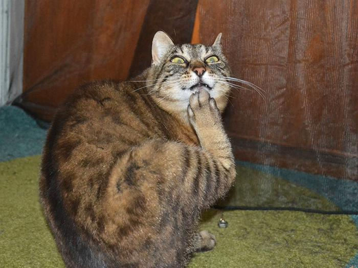 18 gatos excessivamente dramáticos 12