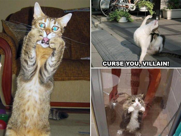 18 gatos excessivamente dramáticos 13