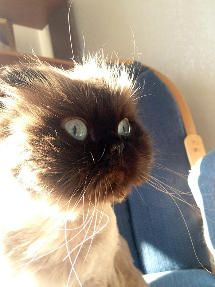 18 gatos excessivamente dramáticos 14