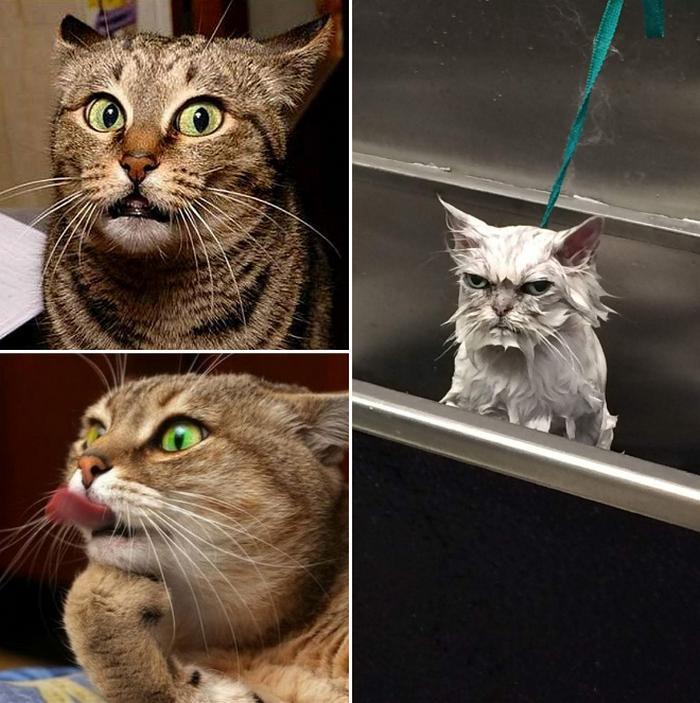 18 gatos excessivamente dramáticos 16