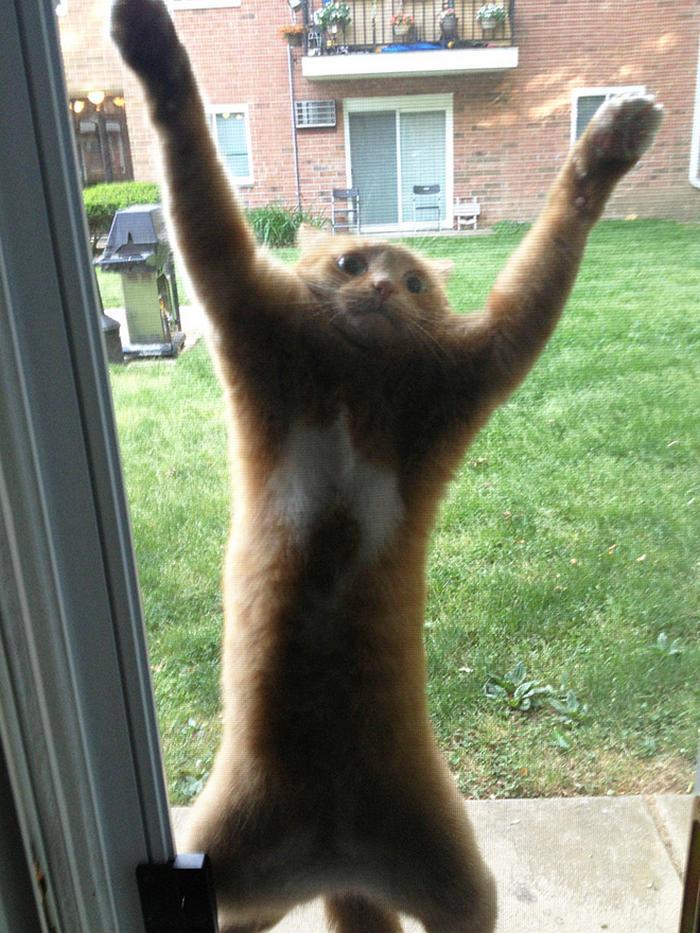 18 gatos excessivamente dramáticos 17