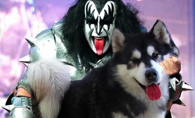 20 guitarras substituídas por cachorros 134