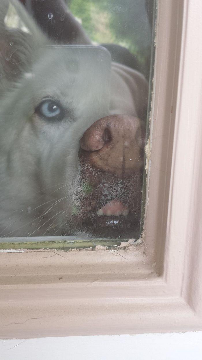25 animais que adora lamber vidros que vão fazer você morrer de rir 6