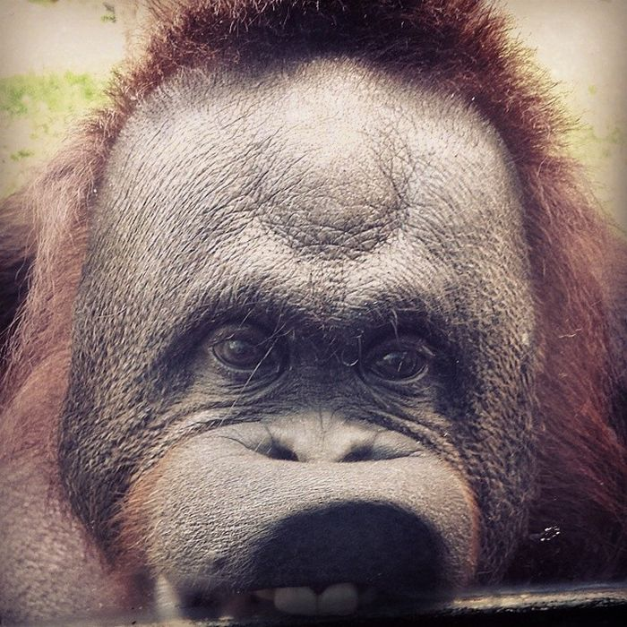 25 animais que adora lamber vidros que vão fazer você morrer de rir 7
