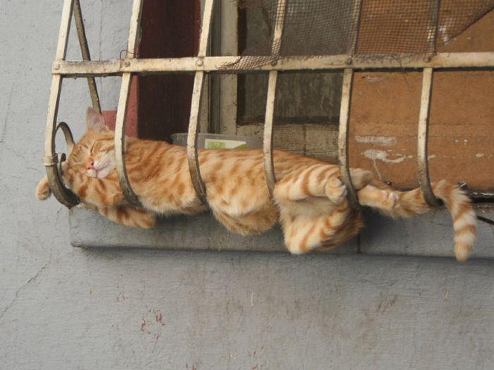 20 gatos derretidos: Resultado direto do aquecimento global 5