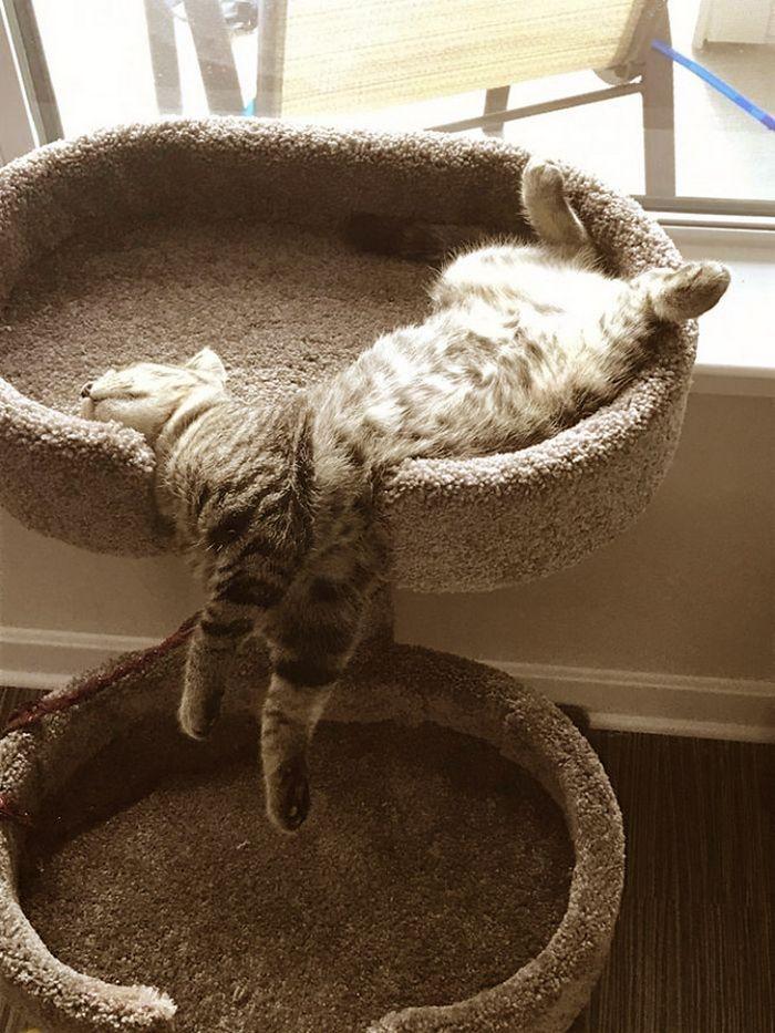20 gatos derretidos: Resultado direto do aquecimento global 11