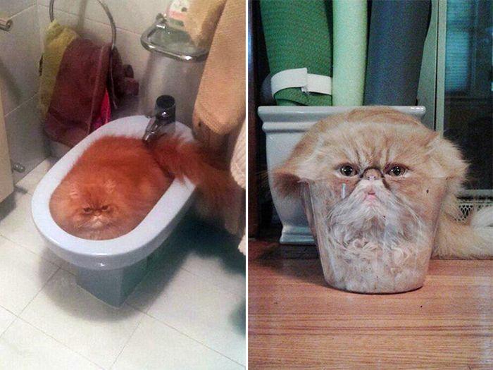 20 gatos derretidos: Resultado direto do aquecimento global 13