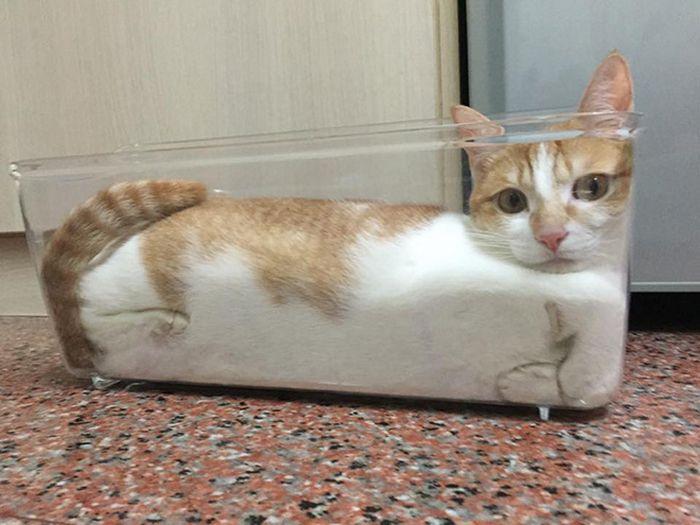 20 gatos derretidos: Resultado direto do aquecimento global 15