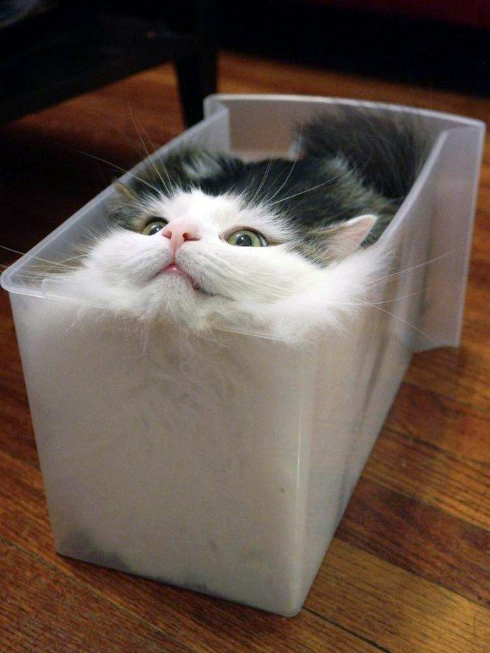 20 gatos derretidos: Resultado direto do aquecimento global 16