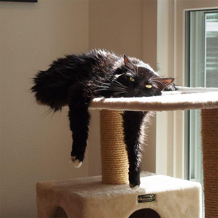 20 gatos derretidos: Resultado direto do aquecimento global 19