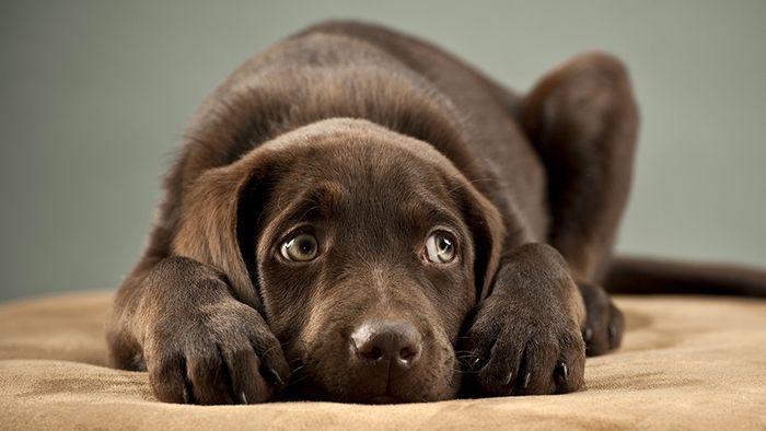 9 incríveis coisas que nossos cachorros podem prever 1