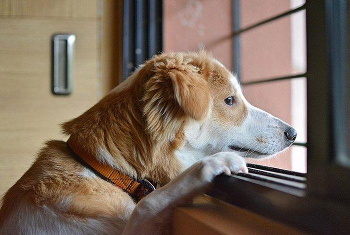 9 incríveis coisas que nossos cachorros podem prever 4