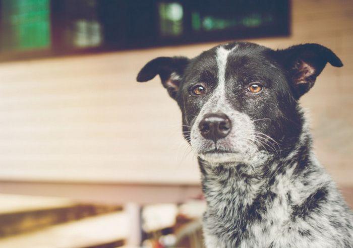 9 incríveis coisas que nossos cachorros podem prever 5