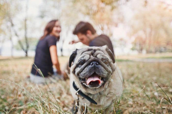 9 incríveis coisas que nossos cachorros podem prever 7