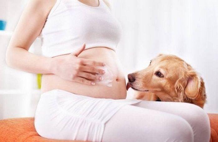 9 incríveis coisas que nossos cachorros podem prever 9