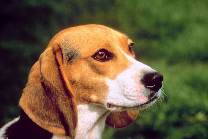 9 incríveis coisas que nossos cachorros podem prever 10