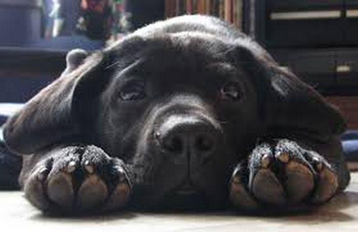 9 incríveis coisas que nossos cachorros podem prever 11