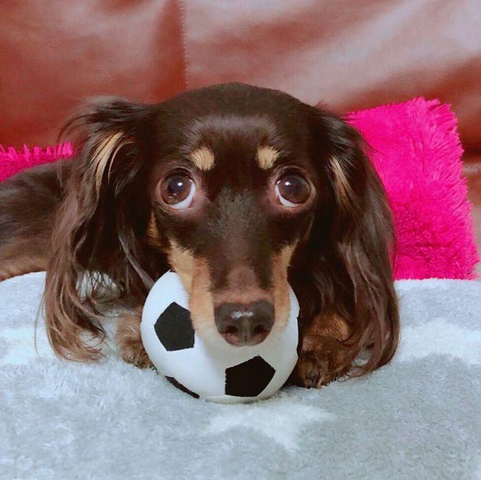 22 misturas de cachorros que deram certo 3