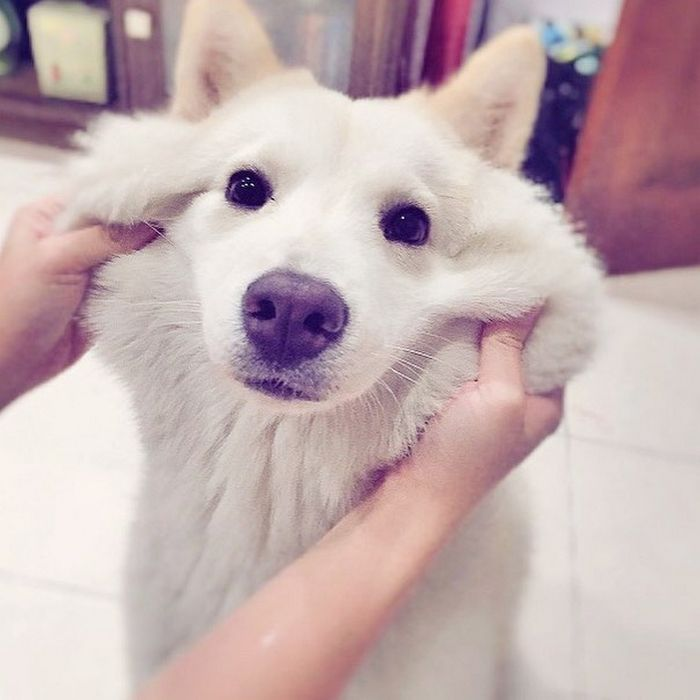 22 misturas de cachorros que deram certo 9