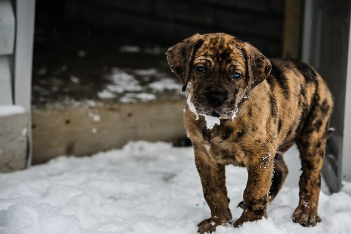22 misturas de cachorros que deram certo 18