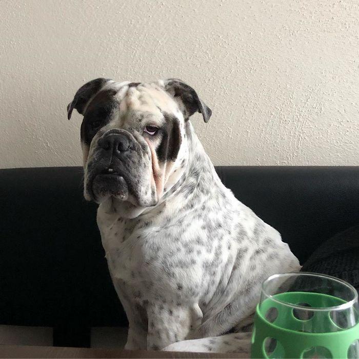 22 misturas de cachorros que deram certo 20