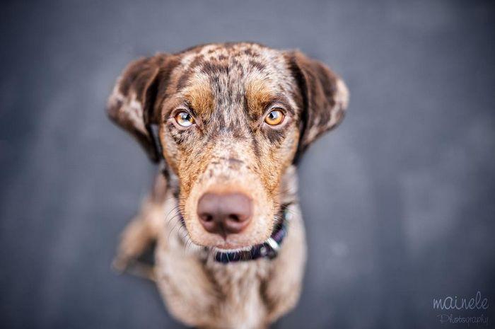 22 misturas de cachorros que deram certo 22