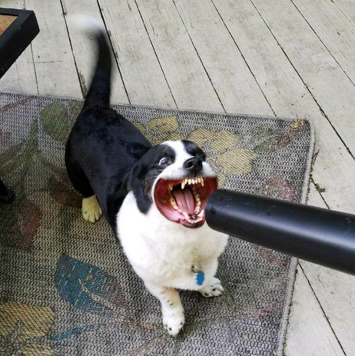 18 cachorros vs vento 7
