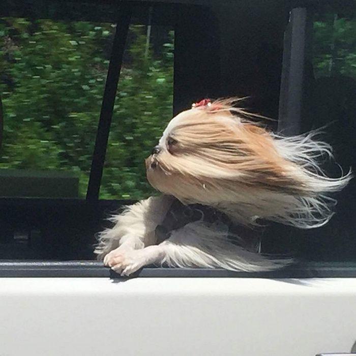 18 cachorros vs vento 8