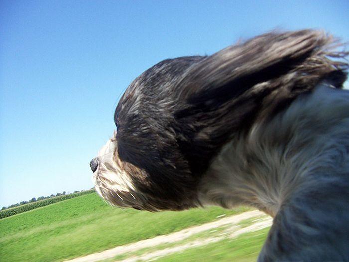 18 cachorros vs vento 11