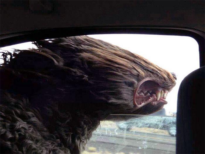 18 cachorros vs vento 14