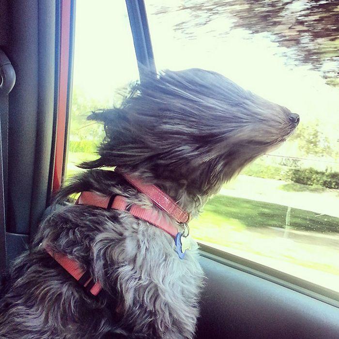 18 cachorros vs vento 16