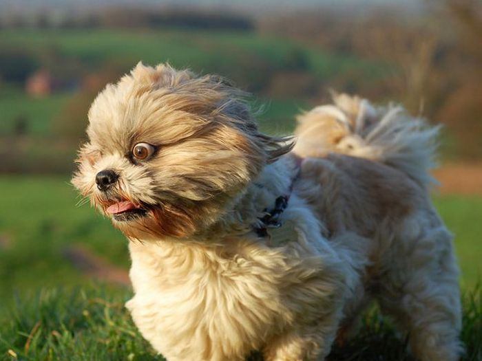 18 cachorros vs vento 18
