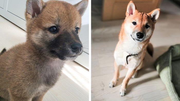 23 fotos que mostram o quão rápido nossos animais de estimação crescem 7
