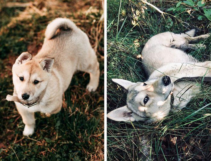 23 fotos que mostram o quão rápido nossos animais de estimação crescem 11