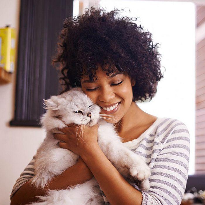 22 gatos odeiam abraços 5
