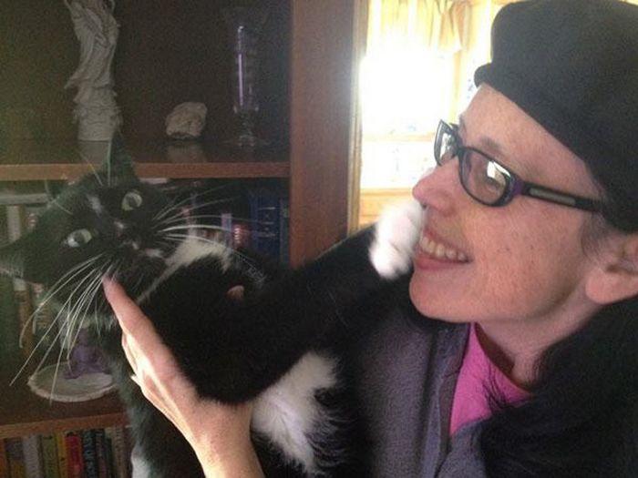 22 gatos odeiam abraços 18