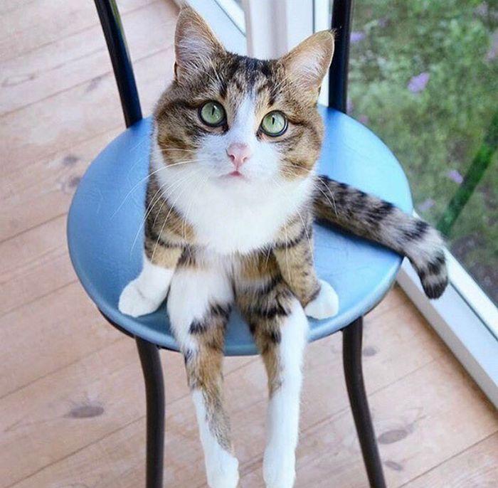 19 gatos sentados desajeitadamente 2