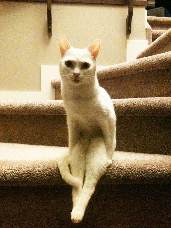 19 gatos sentados desajeitadamente 9