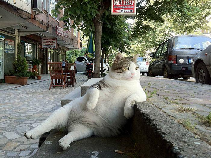 19 gatos sentados desajeitadamente 15
