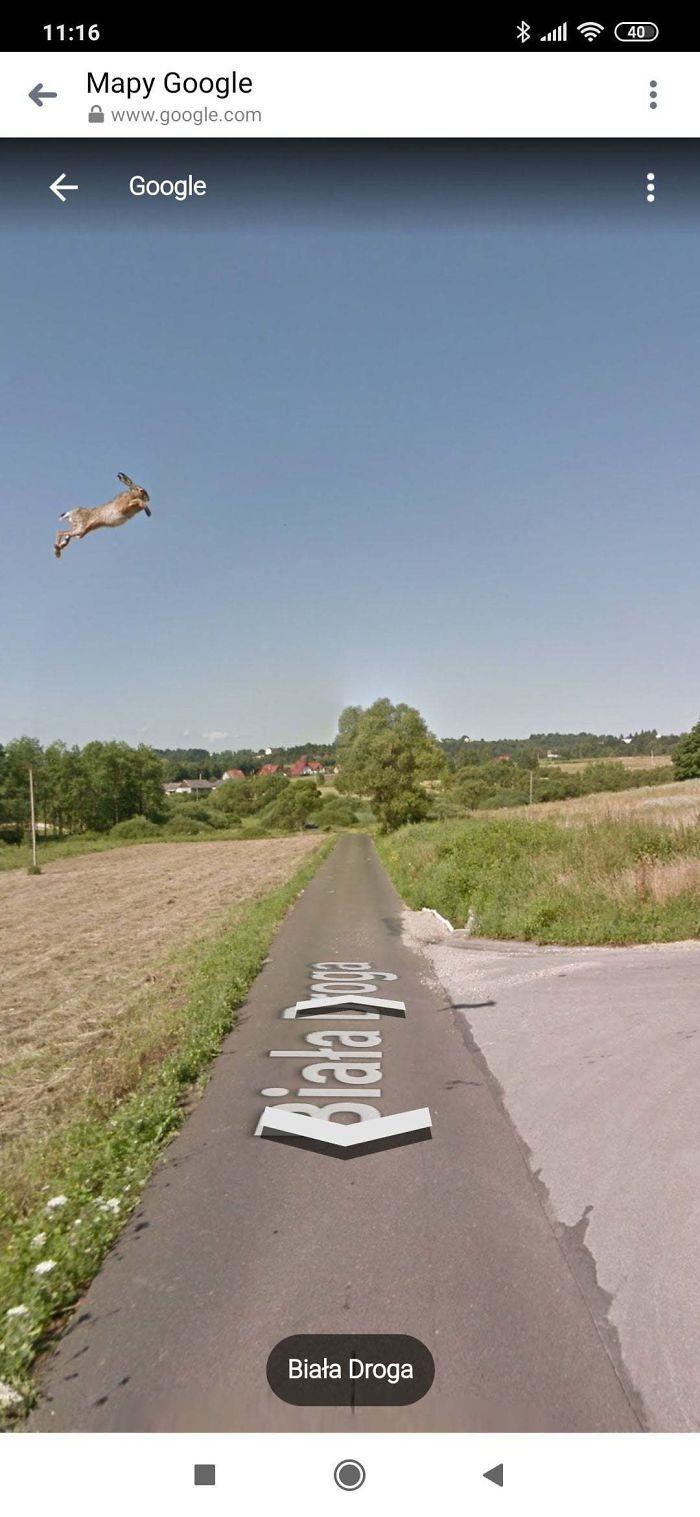 37 melhores fotos de animais tiradas acidentalmente pelo Google Street View 3