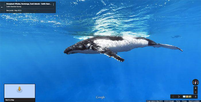 37 melhores fotos de animais tiradas acidentalmente pelo Google Street View 5