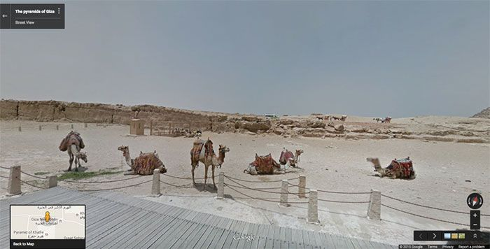 37 melhores fotos de animais tiradas acidentalmente pelo Google Street View 7