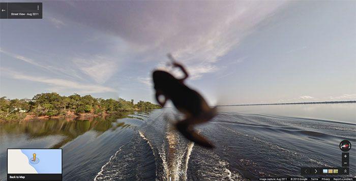 37 melhores fotos de animais tiradas acidentalmente pelo Google Street View 9