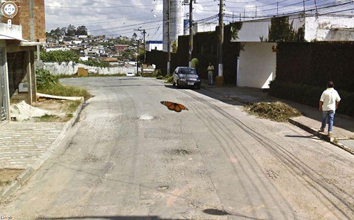 37 melhores fotos de animais tiradas acidentalmente pelo Google Street View 10