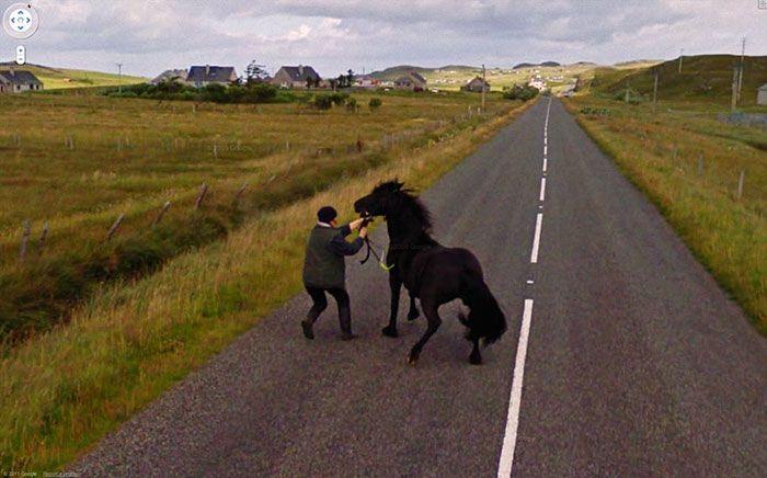 37 melhores fotos de animais tiradas acidentalmente pelo Google Street View 15