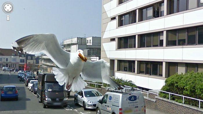 37 melhores fotos de animais tiradas acidentalmente pelo Google Street View 17