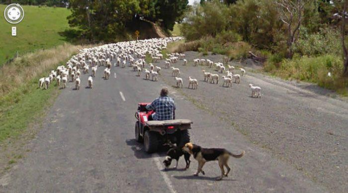 37 melhores fotos de animais tiradas acidentalmente pelo Google Street View 19
