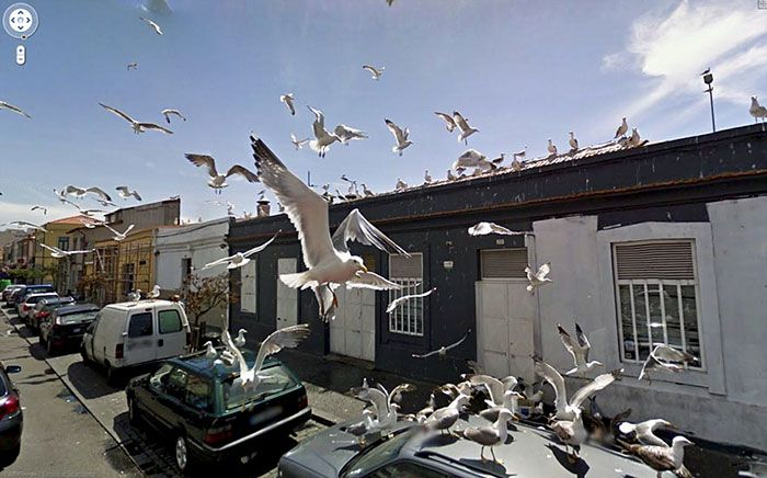37 melhores fotos de animais tiradas acidentalmente pelo Google Street View 20