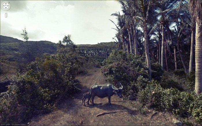 37 melhores fotos de animais tiradas acidentalmente pelo Google Street View 21