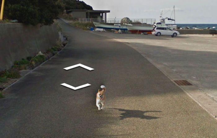 37 melhores fotos de animais tiradas acidentalmente pelo Google Street View 22